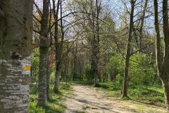 Camino-a-la-Moixina