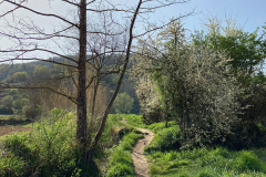 Excursion-por-Olot
